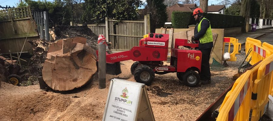 Stump Removal Macclesfield