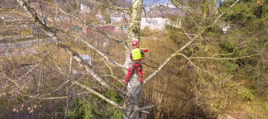 Tree Surgeon Stockport